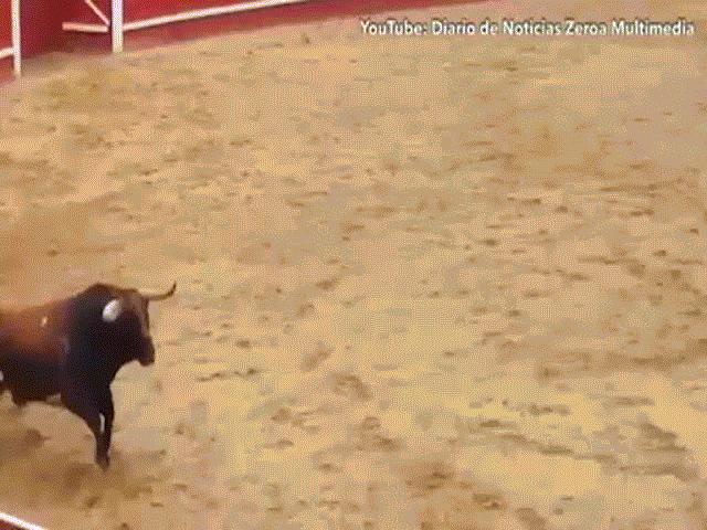 Video: Vừa cho tập thử, bò tót nặng nửa tấn gục chết tại chỗ sau cú húc kinh hoàng của đối thủ