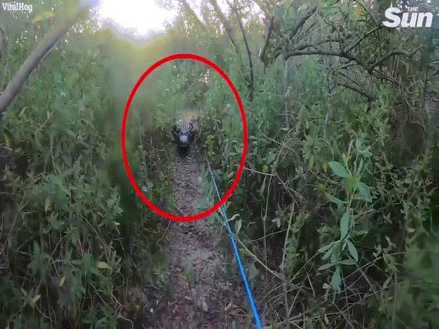 Video: Hoảng hồn cá sấu hơn 3 mét bò từ sông lên đuổi người