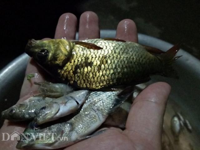Đặc sản Tây Bắc: Cá đang bơi nhảy đưa ngay lên miệng nhai ngon lành