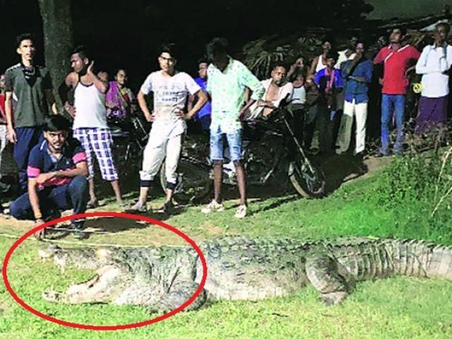Đặt mồi nhử cá sấu giết hại nhiều người lên bờ và màn bắt sống kịch tính