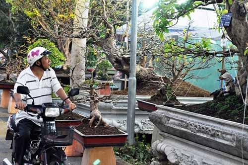 Ngắm dàn lộc vừng gần chục tỷ đồng ở Sài Gòn - hình ảnh 10