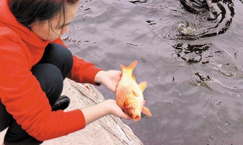 Cách thả cá chép cúng ông Táo đúng ý nghĩa tâm linh - hình ảnh 2