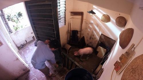 MC Quang Minh xắn quần tắm cho heo giữa chung cư - hình ảnh 4