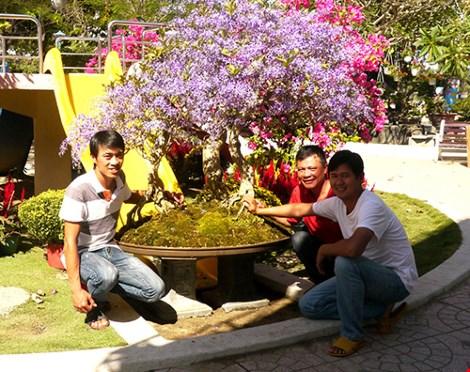 Ngỡ ngàng ngắm cây mai lạ có hoa màu… tím - hình ảnh 4