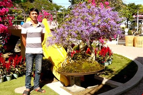 Ngỡ ngàng ngắm cây mai lạ có hoa màu… tím - hình ảnh 6