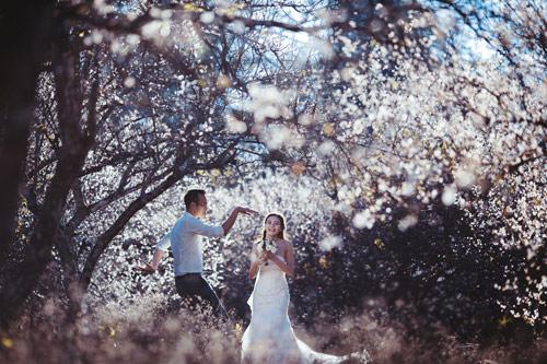 Cặp đôi Hà thành lãng mạn giữa rừng hoa mận trắng muốt - hình ảnh 1