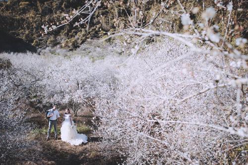 Cặp đôi Hà thành lãng mạn giữa rừng hoa mận trắng muốt - hình ảnh 4