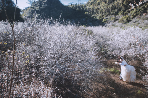Cặp đôi Hà thành lãng mạn giữa rừng hoa mận trắng muốt - hình ảnh 5