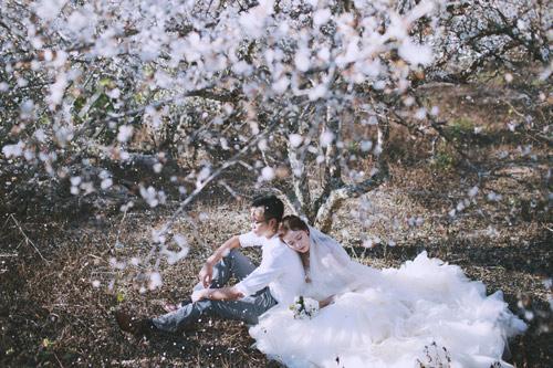 Cặp đôi Hà thành lãng mạn giữa rừng hoa mận trắng muốt - hình ảnh 2