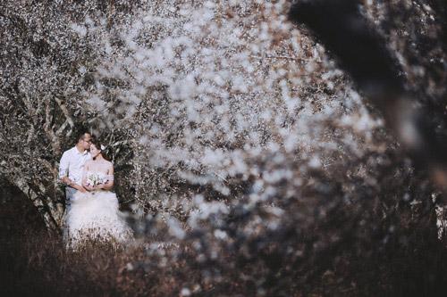 Cặp đôi Hà thành lãng mạn giữa rừng hoa mận trắng muốt - hình ảnh 15