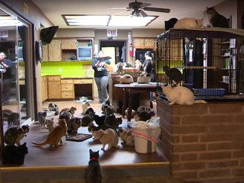 Người phụ nữ 'cuồng mèo', nuôi 1.100 con trong nhà - hình ảnh 1