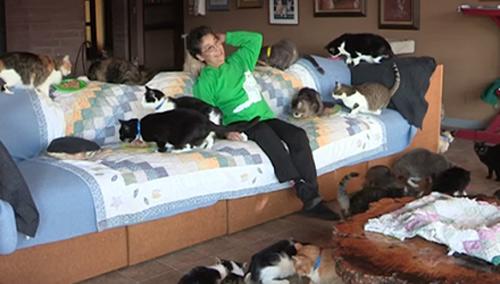 Người phụ nữ 'cuồng mèo', nuôi 1.100 con trong nhà - hình ảnh 2