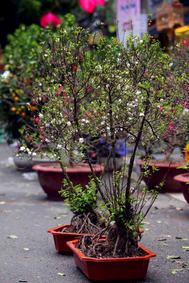 Ảnh: Sắc màu chợ hoa xuân phố cổ ngày cận Tết - hình ảnh 9