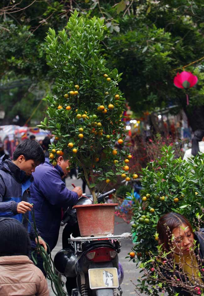 Ảnh: Sắc màu chợ hoa xuân phố cổ ngày cận Tết - hình ảnh 10