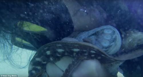Nữ ngư dân quyến rũ giết bạch tuộc bằng răng - hình ảnh 5