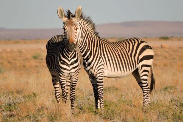 Theo chân nhiếp ảnh 'săn lùng' khoảnh khắc kỳ thú của động vật - hình ảnh 4