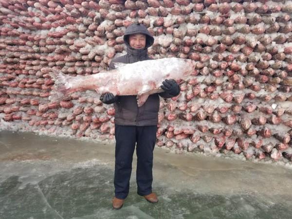 Du khách đổ sô chiêm ngưỡng bức tường cá lạ lùng giữa hồ băng - hình ảnh 9