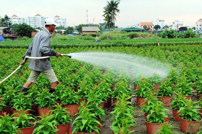 """Ngàn hoa chớm nụ tại nơi """"sản xuất đồ chơi Tết"""" lớn nhất Sài Gòn - hình ảnh 12"""