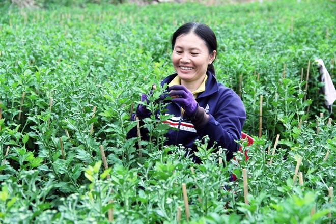 """Ngàn hoa chớm nụ tại nơi """"sản xuất đồ chơi Tết"""" lớn nhất Sài Gòn - hình ảnh 8"""