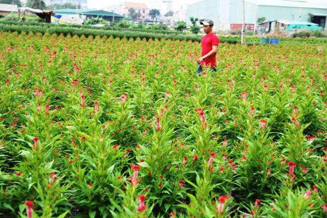 """Ngàn hoa chớm nụ tại nơi """"sản xuất đồ chơi Tết"""" lớn nhất Sài Gòn - hình ảnh 14"""
