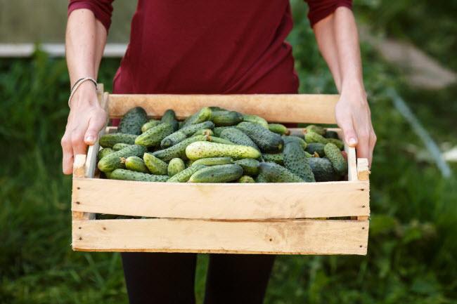 10 thực phẩm hằng ngày giúp cơ thể giải độc tự nhiên - hình ảnh 1