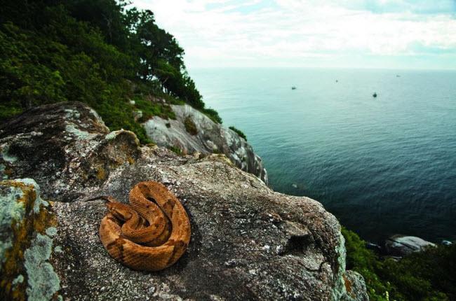 Tim đập chân run khám phá hòn đảo toàn rắn độc - hình ảnh 2