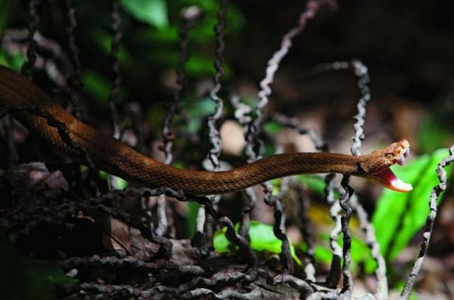 Tim đập chân run khám phá hòn đảo toàn rắn độc - hình ảnh 7
