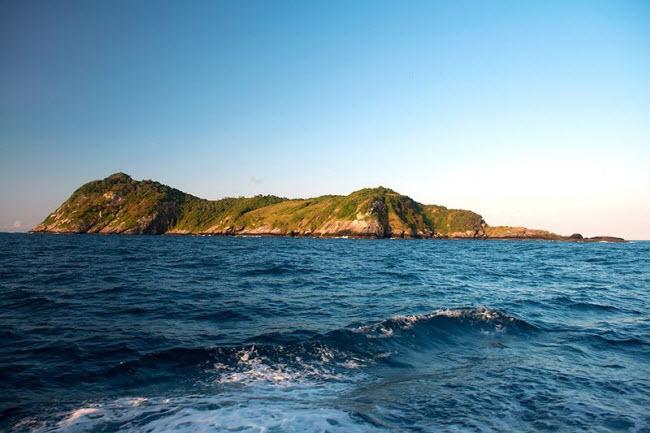 Tim đập chân run khám phá hòn đảo toàn rắn độc - hình ảnh 1