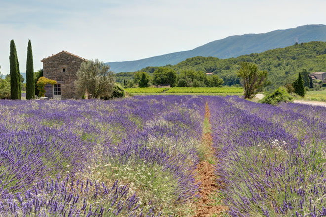 10 địa điểm đẹp như mơ của nước Pháp cần ghé thăm ngay mùa xuân này - 7