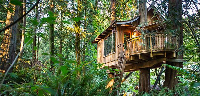 Những khách sạn trên cây khiến du khách mê mẩn vì quá tuyệt vời - hình ảnh 1