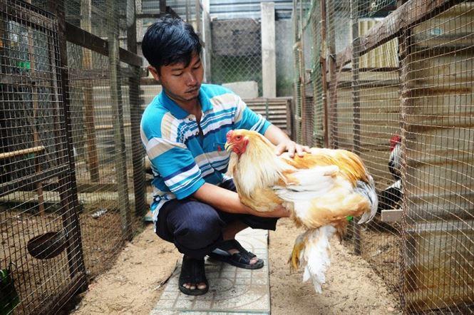 Người Sài Gòn săn 'gà kỳ lân' 5 ngón để ăn Tết - hình ảnh 13