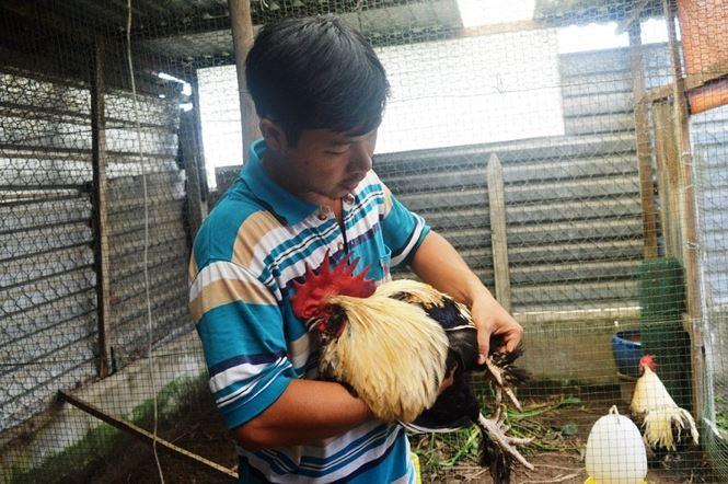 Người Sài Gòn săn 'gà kỳ lân' 5 ngón để ăn Tết - hình ảnh 5
