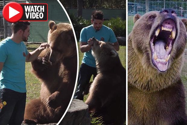 Gia đình Mỹ nuôi 14 gấu khổng lồ như con cháu trong nhà - 1