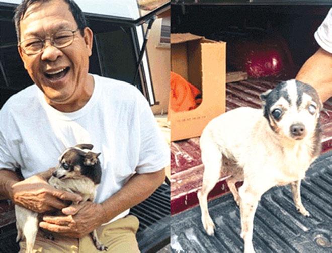 Chuyện về những chú chó dũng cảm cứu chủ - 1