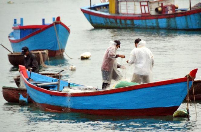 Ngư dân Bình Định trúng đậm ở chuyến ra khơi đầu năm - 1