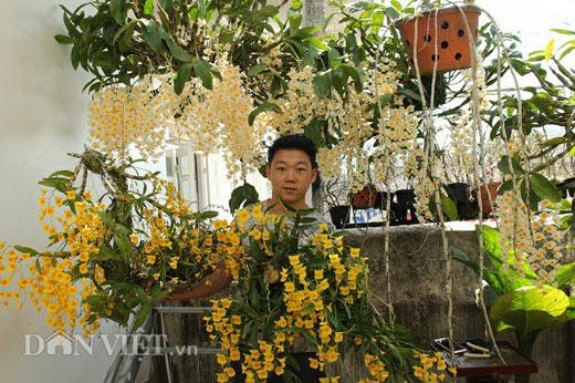 """9X """"già"""" với kinh nghiệm trồng lan thủy tiên, kim điệp ra hoa cực đỉnh - 1"""