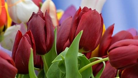 """Những loại hoa nào thích hợp để dành tặng """"một nửa thế giới"""" ngày 8/3? - 2"""