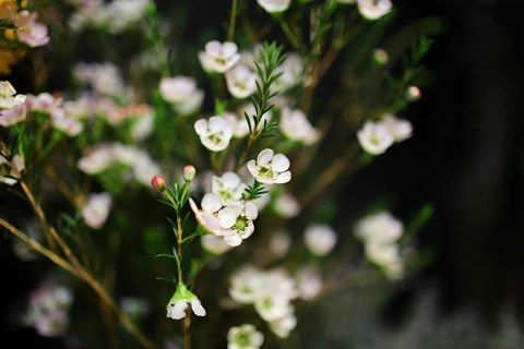 """Những loại hoa nào thích hợp để dành tặng """"một nửa thế giới"""" ngày 8/3? - 3"""