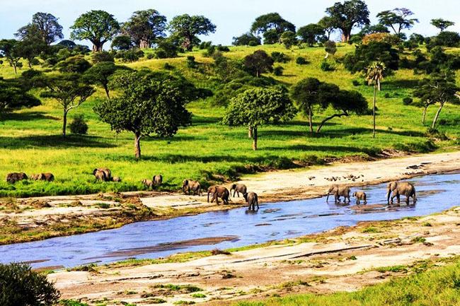 Đi nghỉ trăng mật ở Châu Phi, tại sao không? - hình ảnh 5