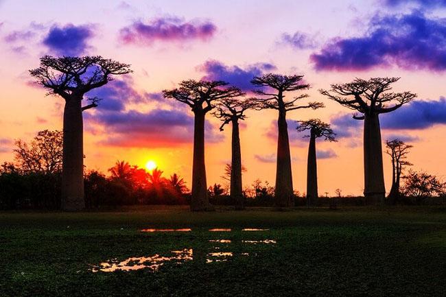 Đi nghỉ trăng mật ở Châu Phi, tại sao không? - hình ảnh 9