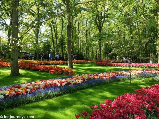 Mãn nhãn với loạt ảnh hoa xuân rực rỡ như lạc vào xứ thần tiên tại Hà Lan - hình ảnh 1