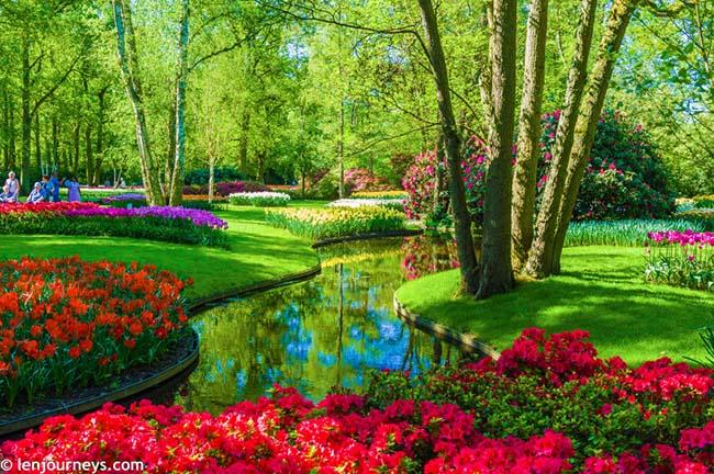Mãn nhãn với loạt ảnh hoa xuân rực rỡ như lạc vào xứ thần tiên tại Hà Lan - hình ảnh 3