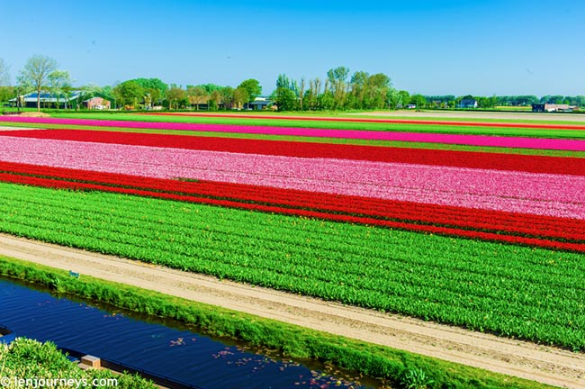 Mãn nhãn với loạt ảnh hoa xuân rực rỡ như lạc vào xứ thần tiên tại Hà Lan - hình ảnh 6