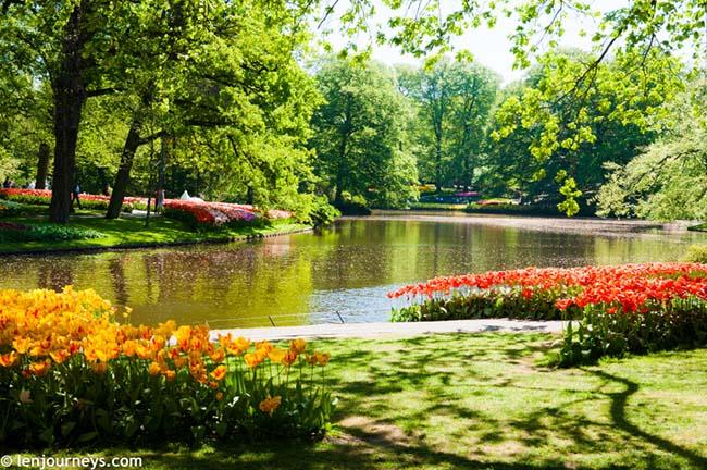 Mãn nhãn với loạt ảnh hoa xuân rực rỡ như lạc vào xứ thần tiên tại Hà Lan - hình ảnh 4