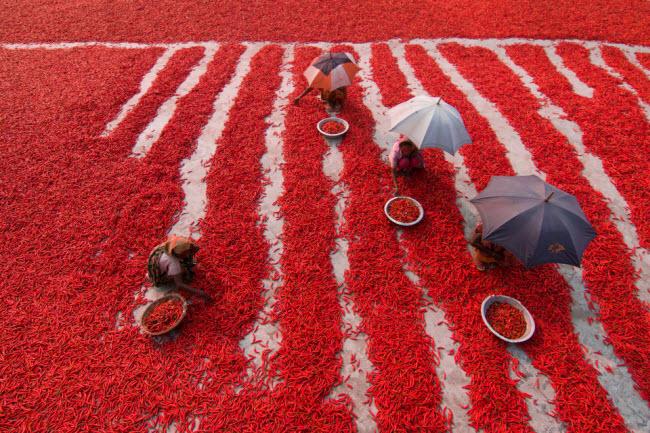 Ảnh Việt Nam lọt top những bức hình tuyệt nhất nhờ khoảnh khắc đẹp xuất thần - hình ảnh 8