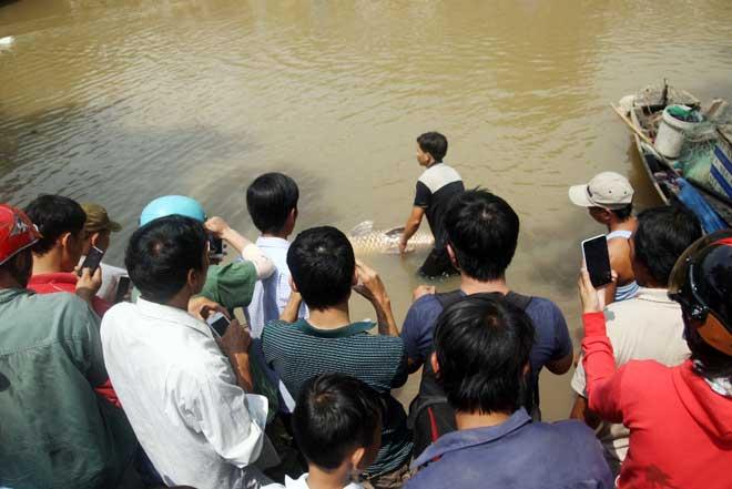 """Theo chân thợ săn cá """"khủng"""", từng 2 lần được lộc trời ban ở Sài Gòn - hình ảnh 19"""