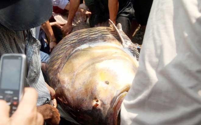 """Theo chân thợ săn cá """"khủng"""", từng 2 lần được lộc trời ban ở Sài Gòn - hình ảnh 20"""