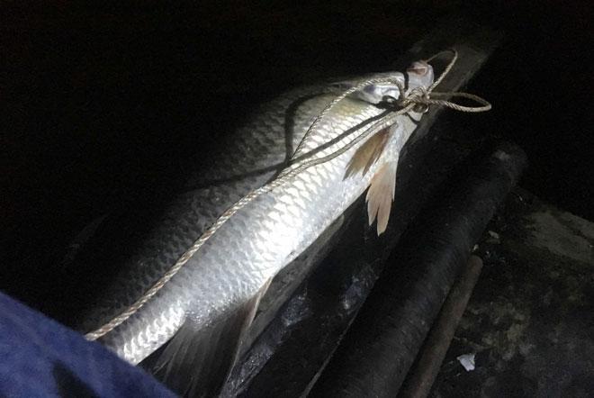 """Theo chân thợ săn cá """"khủng"""", từng 2 lần được lộc trời ban ở Sài Gòn - hình ảnh 14"""