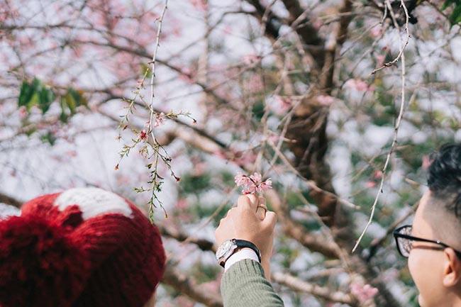 Đà Lạt mùa mai anh đào - Đưa em về với thanh xuân - 9