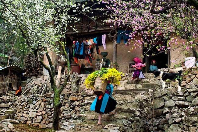 Đến Hà Giang mùa xuân, ngẩn ngơ nhìn đá nở hoa - 13